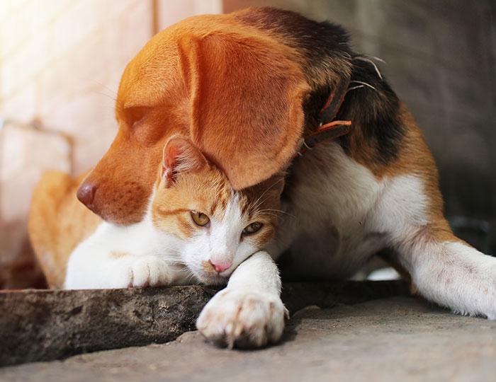 BEWITAL petfood Verantwortung